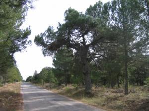 carretera-casilla (1)